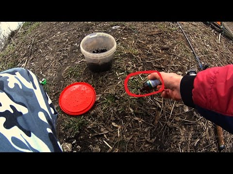 Рыбалка на закидушки весной.Реакция рыбы на Корвалол