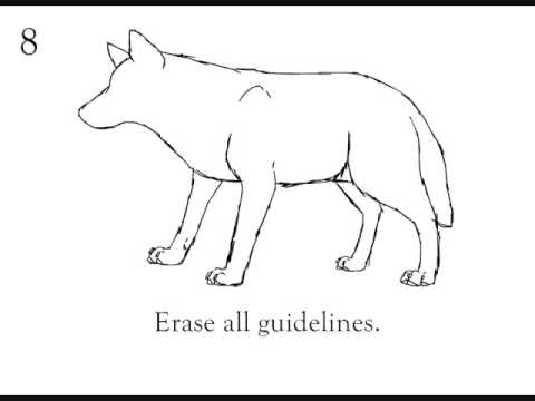 How to draw a wolf step by step beginner tutorial