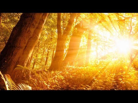 """Peaceful Music, Relaxing Music, Instrumental Music """"Through the Forest"""" by Tim Janis"""