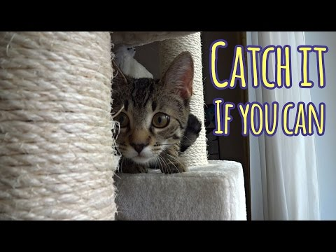 Catch it if you can