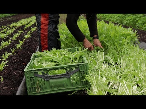 Locavore Glasgow: local organic produce for cafes and restaurants.