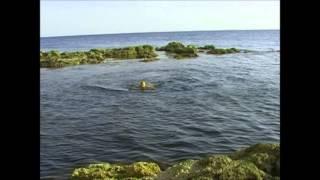 Дикие пляжи Севастополя(На видео: Для тех то любит половить крабов,мидий и тут же приготовить из них блюда на костре добро пожаловат..., 2012-12-20T11:43:59.000Z)