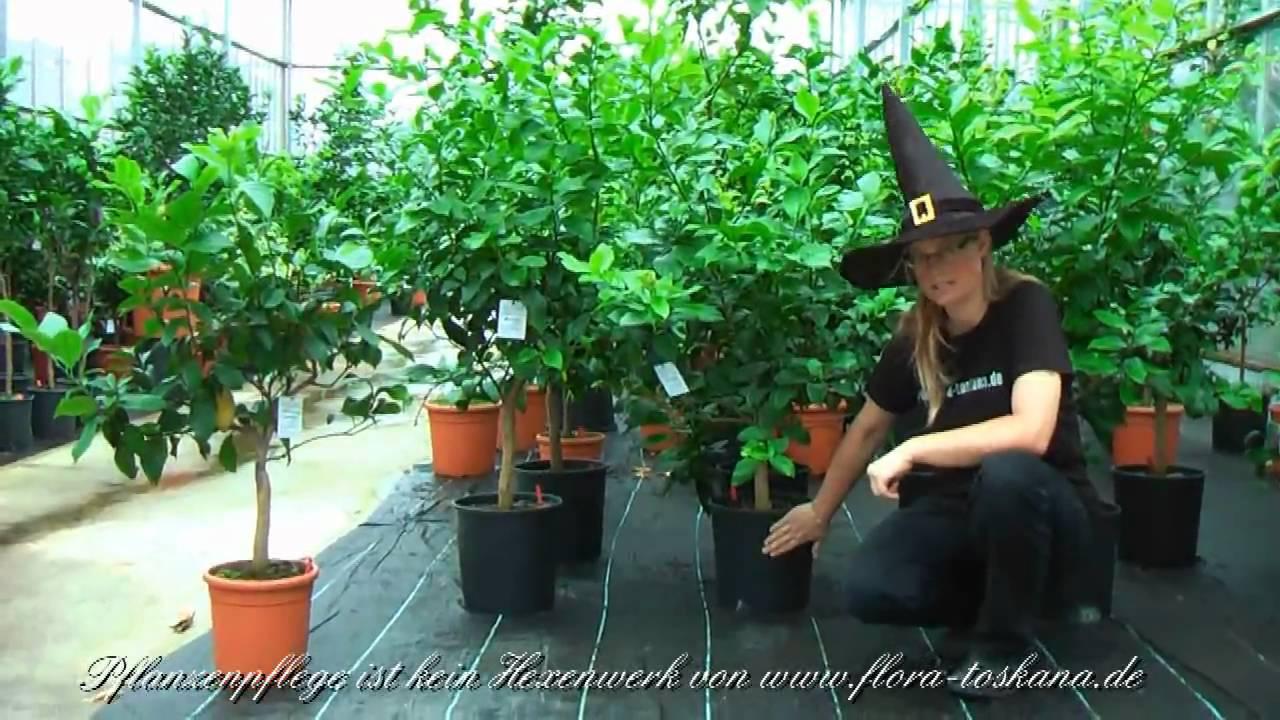pflanzenpflege ist kein hexenwerk richtiges giessen youtube