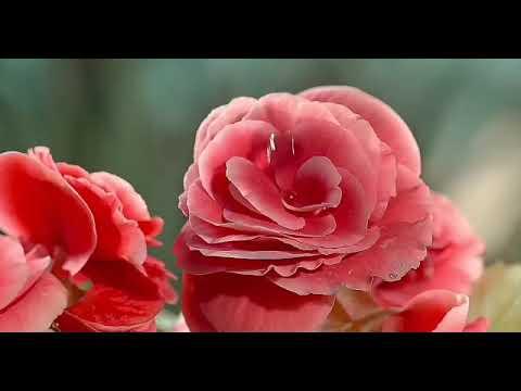 aap-ke-dar-se-koi-na-khali-gaya(lines-from-taaj-dare-haram-atif-aslam)-youtube-·-almuzz