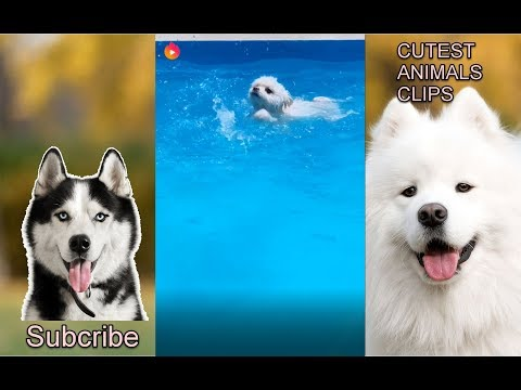 CUTEST ANIMALS IN THE WORLD #14 - Dogs love swimming compilation 2019