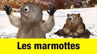 Les marmottes - Têtes à claques thumbnail