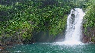The Legend of Tarzan: Swing Among the Trees (360 Video)