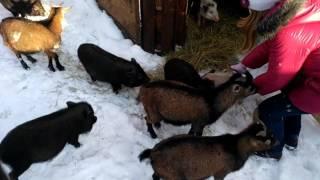 Трогательное видео животные и дети
