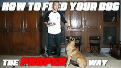 HOW TO FEED YOUR DOG | THE PROPER WAY! - VLOG 03