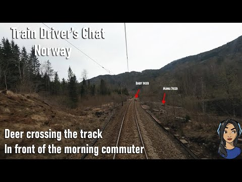 TRAIN DRIVER'S CHAT: Deer Crossing The Track And Spring Rain