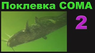 Поклевка Большого СОМА на живца, Подводная Съемка. рыбалка. fishing. Квок, Ловля сома на квок