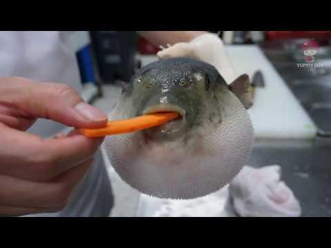 Рыба фугу ест морковь