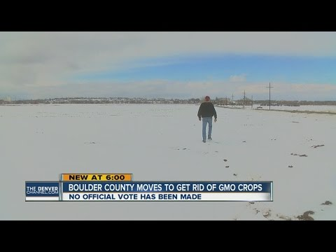Boulder County moves to get rid of GMO crops