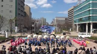 神戸学生よさこいチーム湊 2017がんこ祭3/11(土) 東街区ロータリー会場