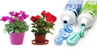 видео Комнатные растения - цветы жизни