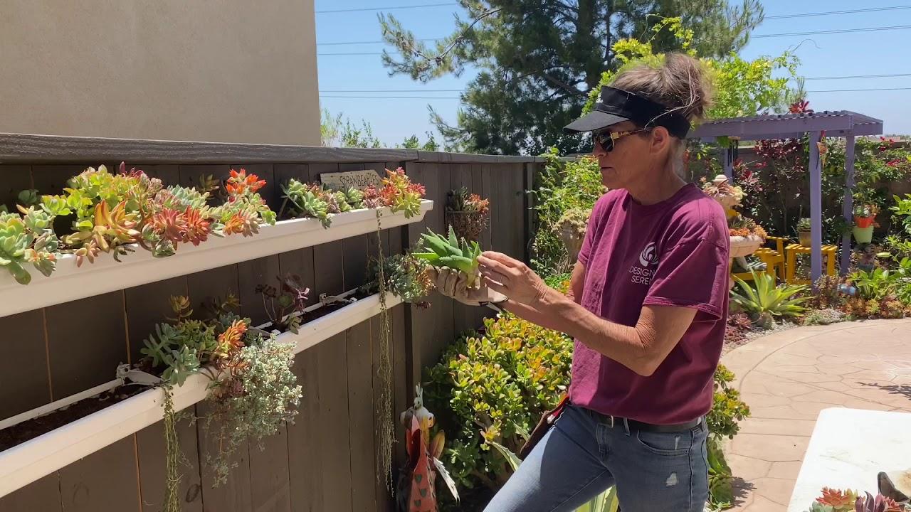 Laura Reworks Her Succulent Gutters
