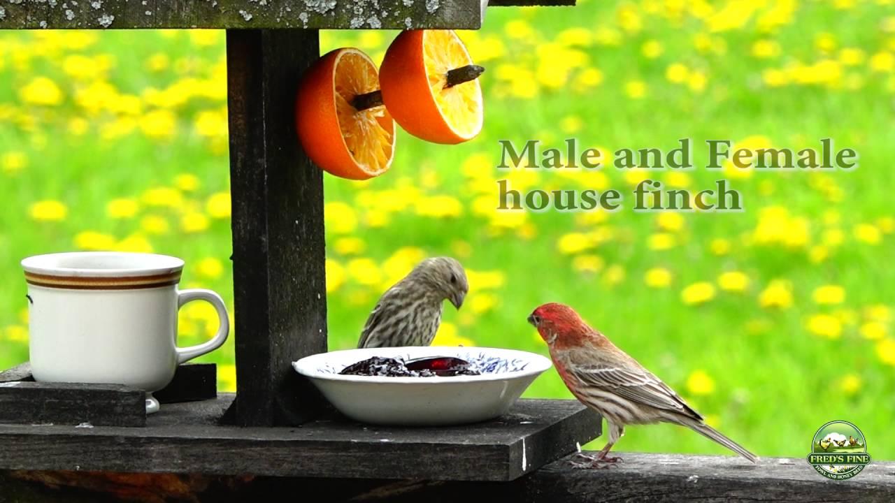 oriole dp best wild com garden tube outdoor feeder classic audubon woodlink feeders amazon bird