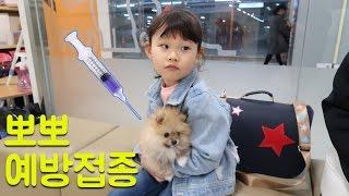 [라임 일상 밀착중계]뽀뽀 예방접종 맞다.라임의 애완동물 강아지 키우기 동물병원 후기 LimeTube & Toy 라임튜브