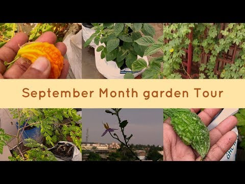 September Month garden Tour | #Madithottam