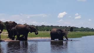 아프리카 여행 보츠와나 보트사파리