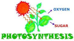 How Do Plants 'MAKE' Energy? w/ Illustration
