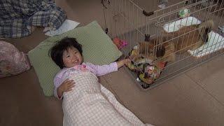 柴犬タロウと家族の日記。 一緒に寝んね.