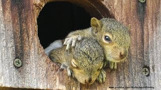 Orphaned Baby Squirrels Rescued -  A Documentary