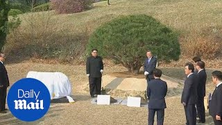 Kim Jong Un and Moon plant pine tree on the demarcation line - Daily Mail