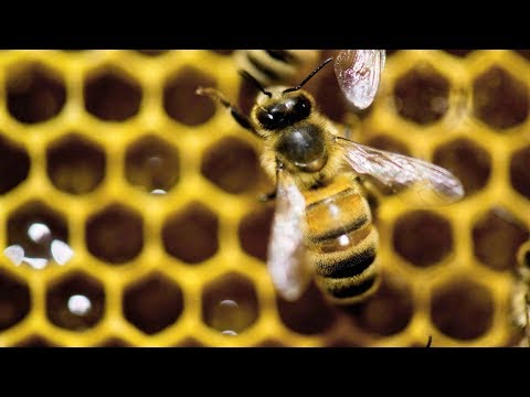 Fighting Fake Honey In Canada
