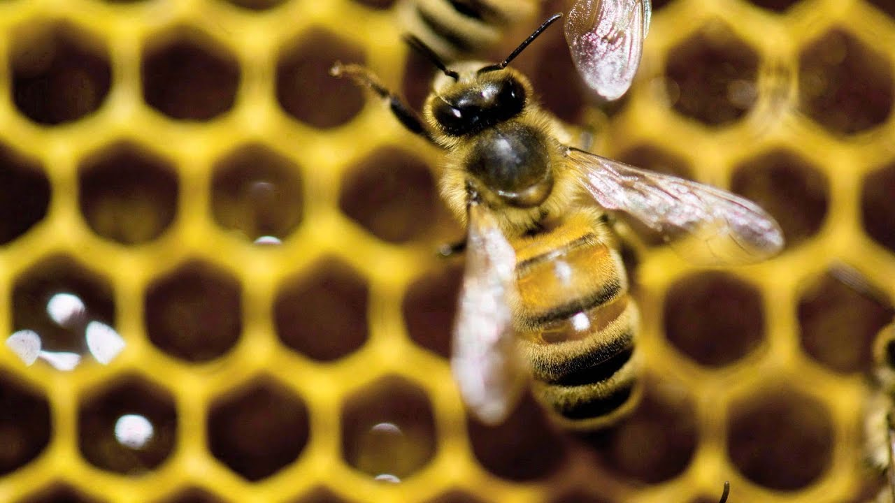 Fighting fake honey in Canada
