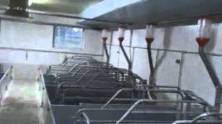 Sektor porodowy.avi