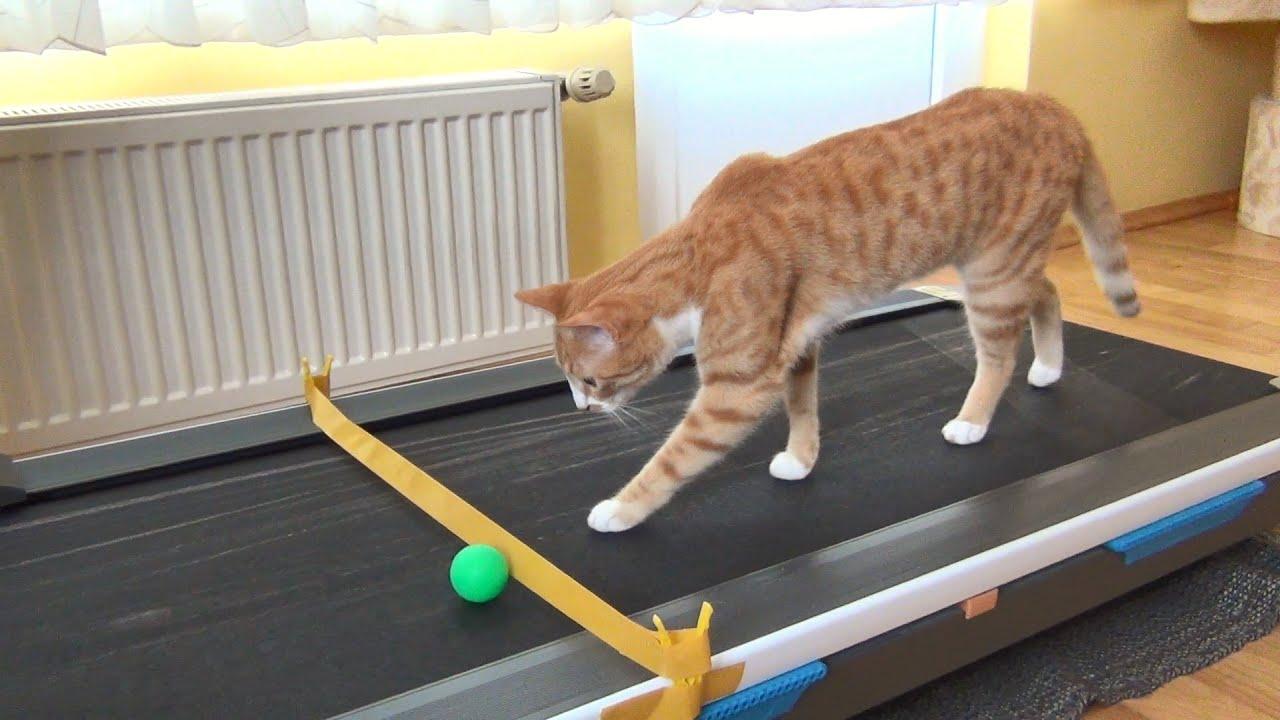 Cat's Reaction to Treadmill