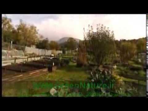 Organic Gardening-Part 1
