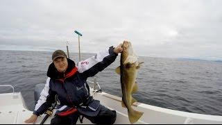Рыбалка в Норвегии. На Север! (часть пятая, заключительная). Хорошая рыбалка. Много солидной трески.