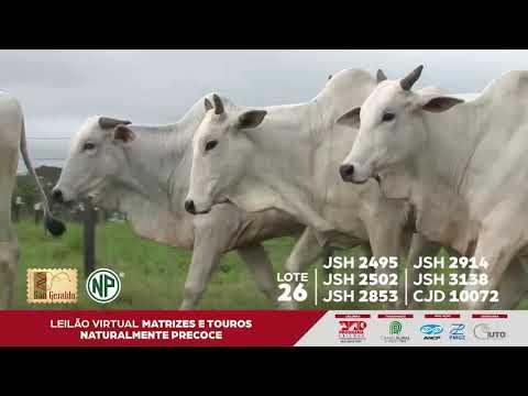 LOTE 26 | JSH 2495 - JSH 2502 - JSH 2853 - JSH 2914 - JSH 3138 - CJD 10072