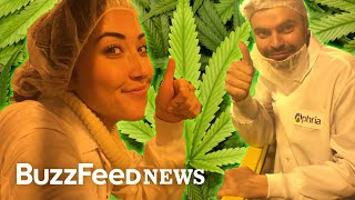 We Got A Look At The Future Of Legal Weed In Canada