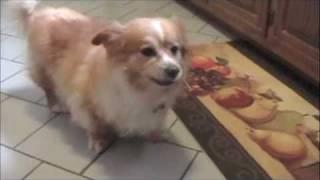 Bo Sneezing