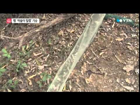 통발 속 뱀들이 '우글우글'…싹쓸이 밀렵 / YTN
