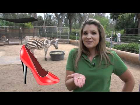 Zebras thumbnail