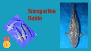Soragoi Koi Variety Guide