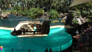 Лоро парк - Loro Park - Тенерифе - Канарские острова(, 2012-06-03T01:57:49.000Z)