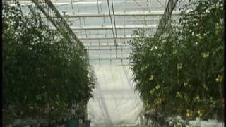 Riococo 300 Grow Bags