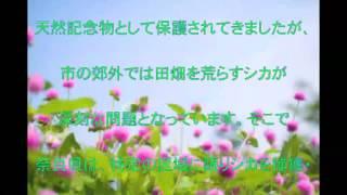 日本熊森協会,シカの殺処分やめて,保護団体,中止,要望,話題,動画