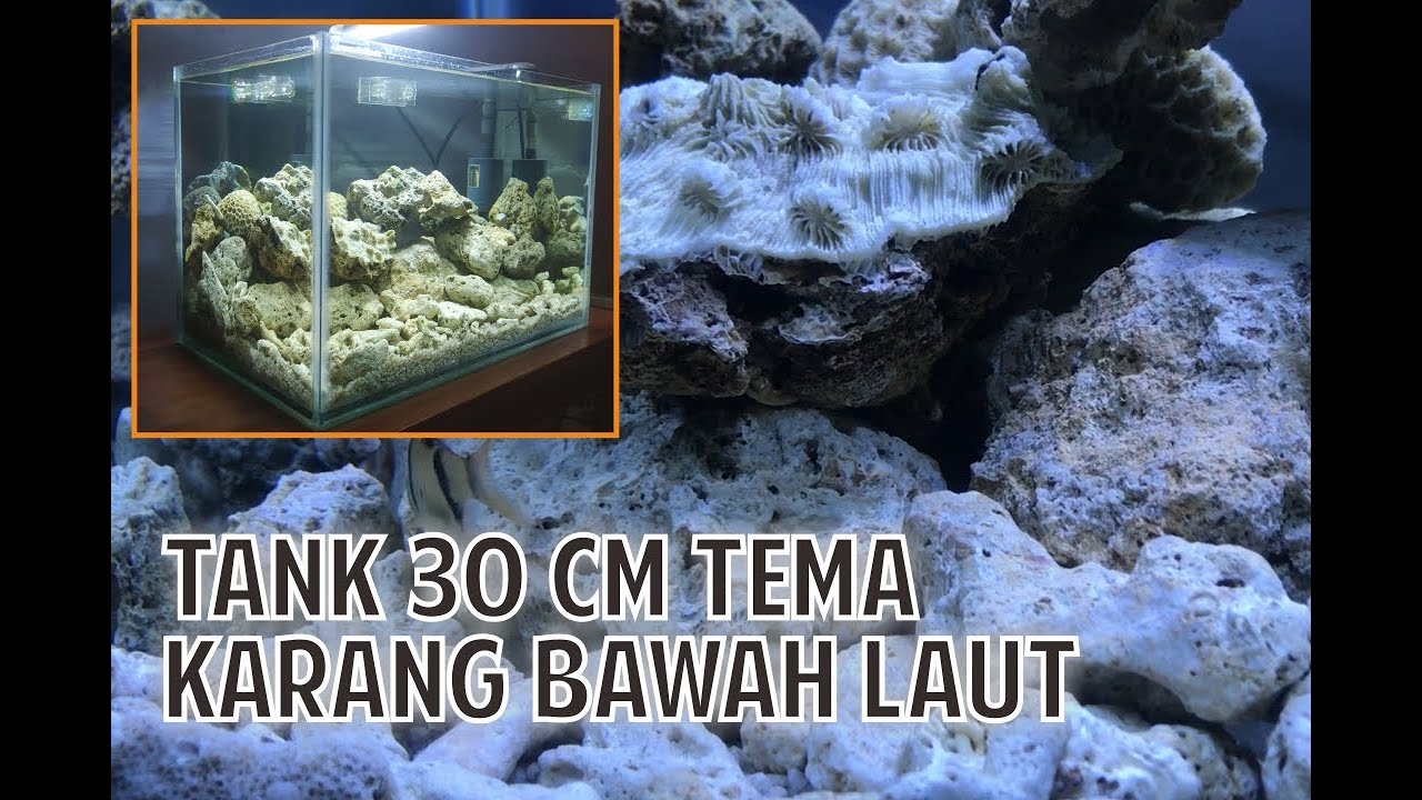 Aquarium Mini Tema Batu Karang Laut Sederhana Untuk Pemula Youtube
