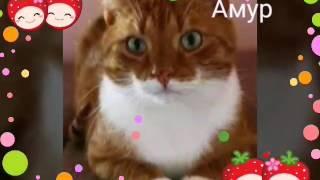 •Клички для рыжих котов•