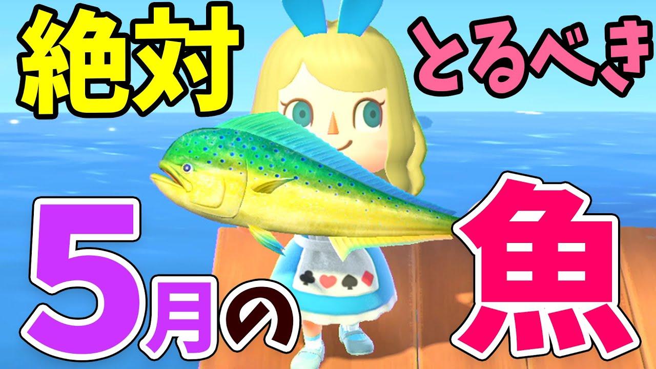 あつ森 6月までの魚