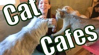 Best Cat Cafes Around The World (Korea, Thailand, Malaysia, Germany)