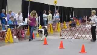 Akc Rally Obedience Advance Course And Excellent Course