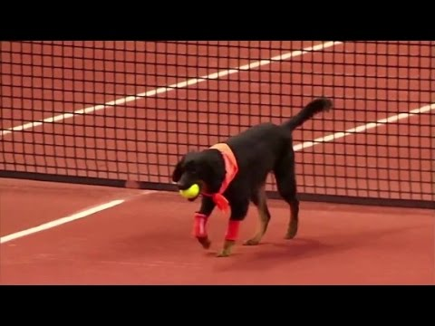 "Shelter dogs rescued from slums and abandoned lots around Sao Paulo were trained as ""ball dogs"" for an exhibition tennis match this week at the Brazil Open"