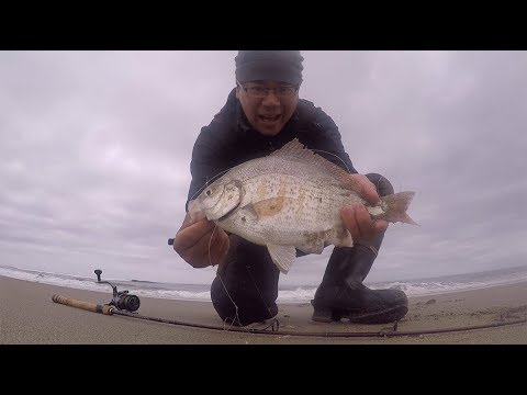 Surf Perch Fishing With A Sabiki Rig